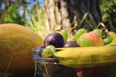 Fresh organic fruits on the plate. Sunny day. River bank royalty free stock photography