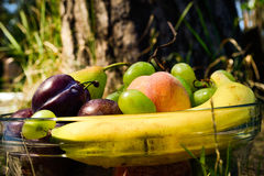 Fresh organic fruits on the plate. Sunny day. River bank stock images
