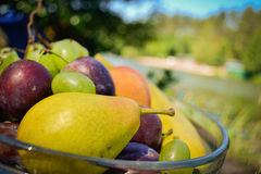 Fresh organic fruits on the plate. Sunny day. River bank royalty free stock photo