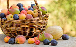 Fresh organic fruits (seasonal fruit) Royalty Free Stock Photos