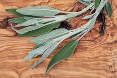 Fresh Organic Garden or Common Sage Salvia officinalis leaves on natural wood. Lamiaceae mint family. Fresh Organic Garden or Common Sage Salvia officinalis royalty free stock photography