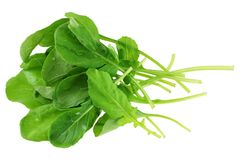 Fresh organic Garden Rocket Salad Stock Photo