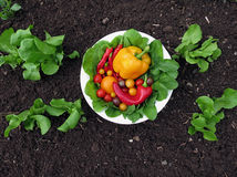 Fresh organic garden vegetables Stock Photo
