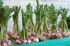 Fresh organic garlic Stock Photos