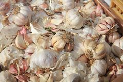 Fresh organic Garlic on Farmers Market Stock Photography