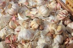 Fresh organic Garlic on Farmers Market stock photography