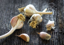 Fresh organic garlic on a wooden background Stock Photos