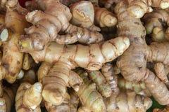 Fresh organic ginger in the market. Fresh of organic ginger in the market Stock Image