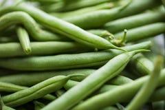 Fresh, organic green beans. Fresh picked organic, healthy green beans Royalty Free Stock Photos
