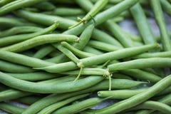 Fresh, organic green beans. Fresh picked organic, healthy green beans Royalty Free Stock Image