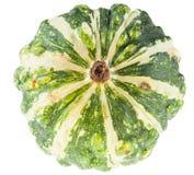 Fresh organic green decorative pumpkin Stock Photos