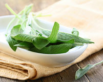 Fresh organic green fragrant sage Stock Image