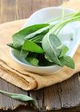 Fresh organic green fragrant sage Royalty Free Stock Photography