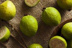 Fresh Organic Green Guava Stock Images