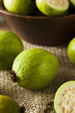 Fresh Organic Green Guava Stock Image