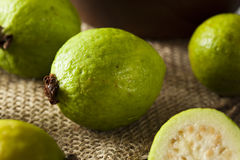 Fresh Organic Green Guava Stock Photography