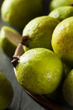 Fresh Organic Green Guava Royalty Free Stock Image