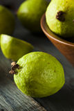 Fresh Organic Green Guava Royalty Free Stock Photos