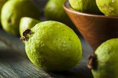 Fresh Organic Green Guava Royalty Free Stock Photos