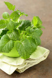 Fresh organic green mint Royalty Free Stock Image