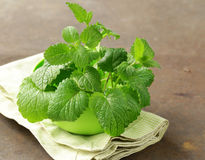 Fresh organic green mint Stock Photo