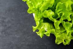 Fresh organic green salad Royalty Free Stock Photos