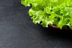 Fresh organic green salad Stock Photos
