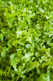 Fresh Organic Green Vegetables Stock Images