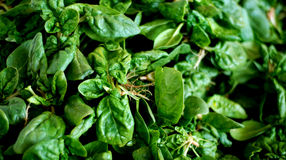 Fresh organic gren spinach at market Royalty Free Stock Images