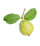 Fresh organic guava fruit isolated on white background Royalty Free Stock Photo