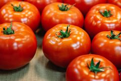 Fresh, organic, hand-picked ripe tomatoes for sale at a roadside farmer`s market royalty free stock photos
