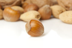 Fresh Organic Hazelnut Royalty Free Stock Photography