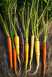 Fresh Organic Heirloom Carrot varieties of purple, yellow, orange Stock Photography