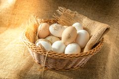Fresh organic Hen eggs in basket wrapped with burlap fabric material and with direct morning sunshine light effect. Stock Photos
