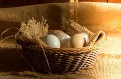 Fresh organic Hen eggs in basket wrapped with burlap fabric material and with direct morning sunshine light effect. Stock Photo