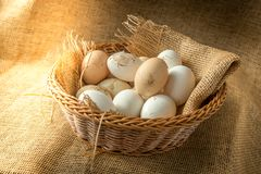 Fresh organic Hen eggs in basket wrapped with burlap fabric material and with direct morning sunshine light effect. Royalty Free Stock Images
