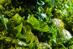 Fresh organic herbs on display. Supermarket shelf, Fresh organic herbs on display parsley, dill, green onion, radish. Fresh organic Vegetables and fruits on Stock Image