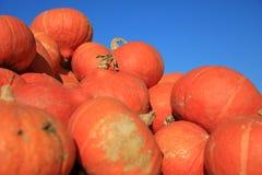 Fresh organic Hokkaido Pumpkins royalty free stock photography