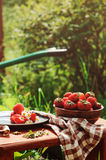 Fresh organic home growth strawberries on wooden table in plate Royalty Free Stock Photos