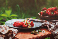 Fresh organic home growth strawberries on wooden table in summer garden Stock Photography