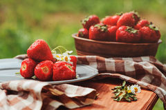 Fresh organic home growth strawberries on wooden table in summer garden Stock Photo