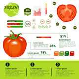 Fresh Organic Infographics Natural Vagetables Growth, Agriculture And Farming. Flat Vector Illustration vector illustration