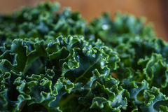 Fresh organic kale. Close up of a leaf of fresh organic kale with an interesting pattern and texture on top of the leaf Stock Images