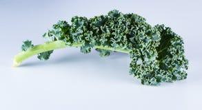 Fresh organic kale Royalty Free Stock Photos