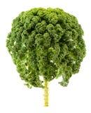 Fresh organic kale on white. Background Royalty Free Stock Image