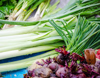 Fresh organic leek Stock Images
