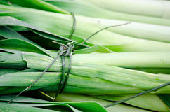 Fresh organic leek. Sold at street market Royalty Free Stock Image