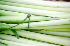 Fresh organic leek. Sold at street market Stock Images