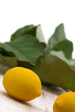 Fresh organic lemons Stock Photography