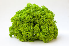 Fresh organic lettuce. Excellent salad Royalty Free Stock Photo